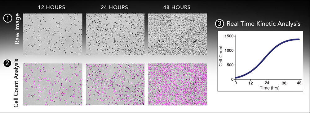 Environmental controls for live cell imaging