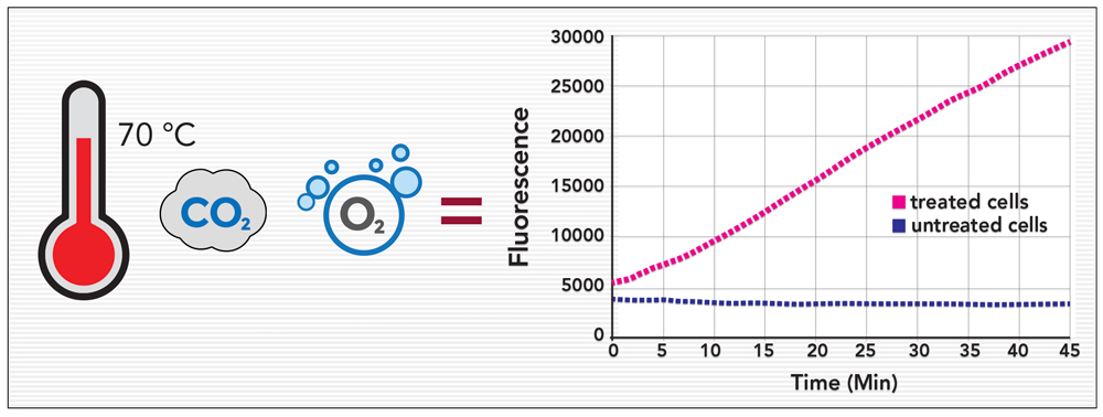 Environmental controls for cell-based assays