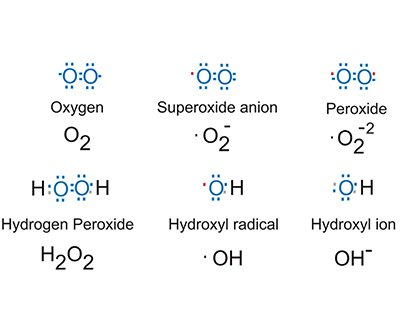 Electron structures of reactive oxygen curve (AUC) species, detectable using Synergy HTX